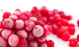красный цвет жизни смородины ягод все еще заморожено стоковые фотографии rf