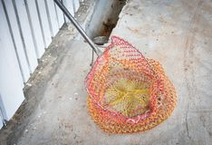 Красочная сеть для животных задвижки стоковые фото