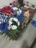 Красочный букет съеденный котом стоковая фотография rf