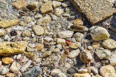 Красочное морское дно камешков и камней под кристально ясной морской водой с отражениями солнечного света стоковое фото rf