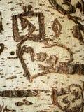 Крупный план коры тополя с резным изображением стоковое изображение