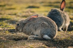 Кролик в парке стоковое фото rf