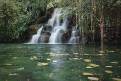 Крошечный водопад и зеленый пруд воды в лесе стоковые фотографии rf