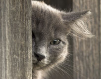 Кitten peeks out,looks into the camera with one eye.  stock image