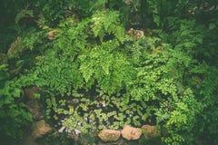 Ковер тропических заводов, предпосылка весны лета, стильно подкрашиванная картина джунглей стоковое изображение rf