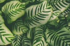 Ковер тропических заводов, предпосылка весны лета, стильно подкрашиванная картина джунглей стоковые изображения
