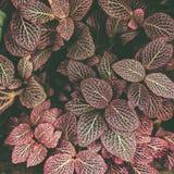 Ковер тона тропических заводов красного, предпосылки весны лета, стильно подкрашиванной картины джунглей стоковые изображения rf