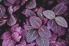 Ковер тона тропических заводов пурпурного, предпосылки весны лета, стильно подкрашиванной картины джунглей стоковое изображение rf
