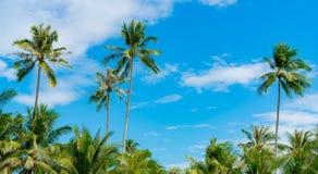 Кокосовая пальма против голубого неба и белых облаков Лето и концепция пляжа рая пальма кокоса тропическая каникула территории ле стоковое фото rf