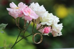 Кольцо и розы стоковое фото rf
