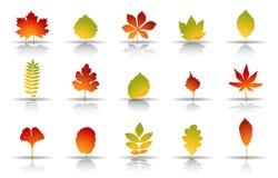Комплект значка листьев осени иллюстрация штока