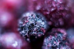 Конец-вверх замороженных ягод стоковые фотографии rf