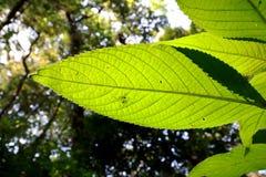 Конец вверх лист принятых под яркое солнце - предпосылку изображения стоковое изображение rf