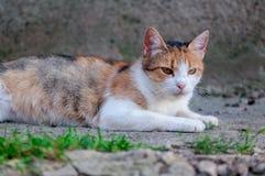 Конец-вверх случайного кота стоковое изображение