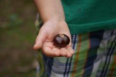 Конский каштан в руке ребенка - близкой вверх стоковая фотография rf