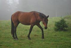 Конь Royalty Free Stock Photos