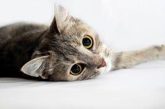 кошка Stock Images