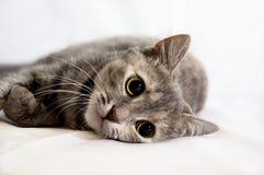 кошка Stock Photography