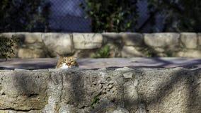Кот вытаращиться через блок стоковое изображение rf