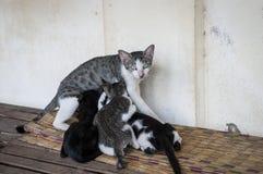 Кот и котята стоковая фотография