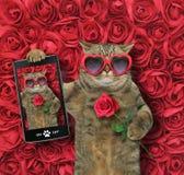 Кот принимает selfie с розой 2 стоковое изображение