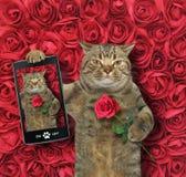 Кот принимает selfie с розой стоковое фото
