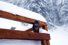 кот сидит на деревянных перилах стоковое изображение rf