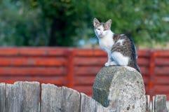 Кот сидя на двери стоковые фотографии rf