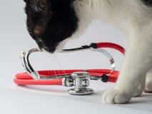 Кот со стетоскопом на белой предпосылке стоковое изображение rf