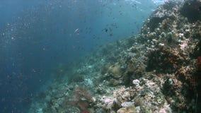 Коралловый риф в радже Ampat, Индонезии 4k видеоматериал