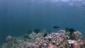 Коралловый риф в радже Ampat, Индонезии 4k акции видеоматериалы