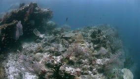 Коралловый риф Ampat Индонезии раджи со школой чешуйниц 4k сток-видео