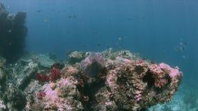 Коралловый риф 4k Ampat Индонезии раджи красочный акции видеоматериалы