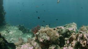 Коралловый риф 4k Ampat Индонезии раджи красочный видеоматериал