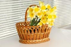 Корзина Narcissus, пасха, женщины цветка narcissus весны желтые или день матерей стоковые изображения
