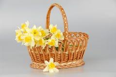 Корзина Narcissus, пасха, женщины цветка narcissus весны желтые или день матерей стоковые фото