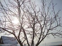 Ландшафты зимы и снега в деревне стоковые изображения rf