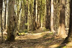 Ландшафт Коннектикута litchfield леса государства Topsmead стоковые изображения rf