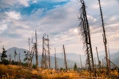 Ландшафт мертвых древесин на наклоне гор стоковые фото