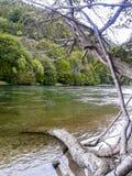 Ландшафт: деревья и река стоковая фотография