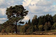 Ландшафт с деревьями и кустами летом стоковые изображения