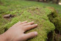 Ласкать поверхность зеленого мха с рукой внутри леса стоковая фотография rf