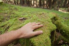 Ласкать поверхность зеленого мха с рукой внутри леса стоковые изображения