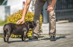Ласка собаки кавказскими людьми стоковые изображения rf