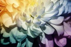 Лепестки цветка близки комбинация гармоничная стоковые изображения rf