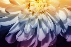 Лепестки цветка близки комбинация гармоничная стоковое фото rf