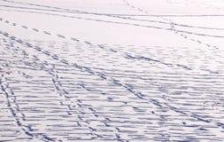 Лед и мир снега стоковые фото