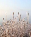 Лед и трава стоковое фото rf