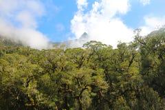 Лес на Milford Sound в южном острове Новой Зеландии стоковое фото rf