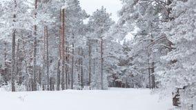 Лес снега стоковые изображения